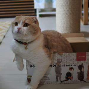 新しい箱は取り合いになる