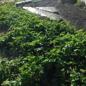ジャガイモの初掘り、写真展へ~♪