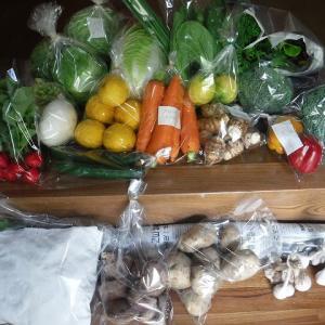 新鮮な野菜を採って~♪