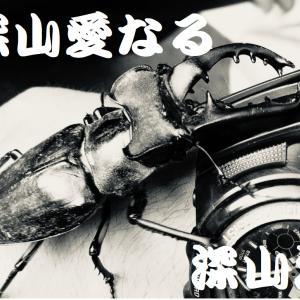 福岡県田川郡産ミヤマ最後のマット交換