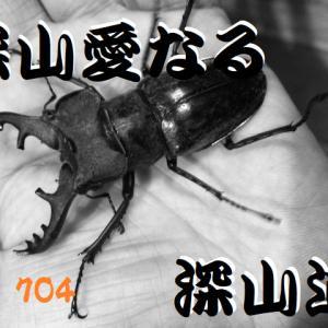 福岡県田川郡産ミヤマ2年1化 2号羽化してました