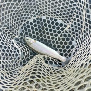 アングラーズパークキングフィッシャー【栃木の倅イベントで残っている魚を狙う!】