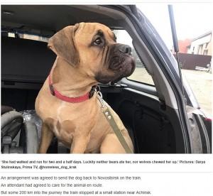 【動画あり】ロシアが泣いた、飼い主に200キロ先で捨てられた犬が戻ろうとした
