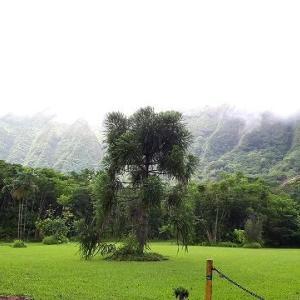 ホオマルヒアボタニカルガーデンは雨。