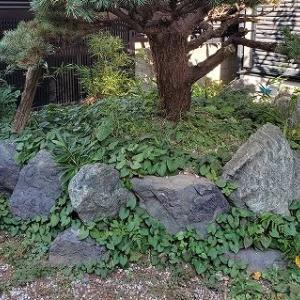 ドクダミ取りと植え替えのお庭