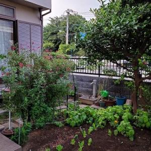 和風の収穫ガーデン♪