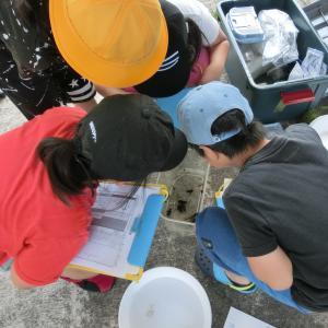 小学生と川の生きもの調査・今日はヨコエビの日