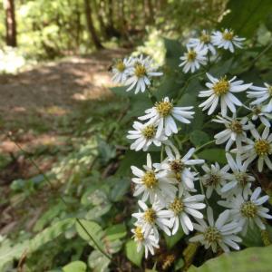 飯南町ふるさとの森で10月にみられる花