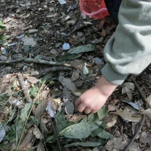 ドングリを拾い集めるだけの自然観察会もシーズンならでは