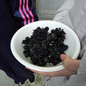 木を伐ることでおいしい焼き芋が食べられる!?森づくりの恩恵をいただきます♪