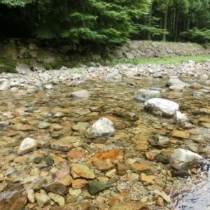 ~ネイチャーガイドのお仕事~【森のようちえん】子どもと楽しむ川の生きものかんさつ