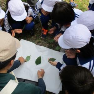 ~ネイチャーガイドのお仕事~【出前授業】小学生の樹木学習はどうやるか?