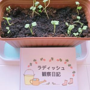 食育★子供と一緒に家庭菜園