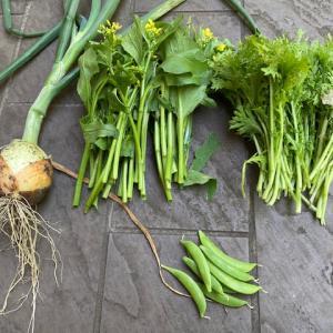自家製野菜でメインデッシュ