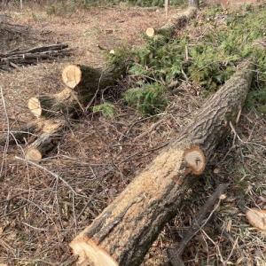 週末は「薪狩り」薪は年々手に入れのが難しく・・・