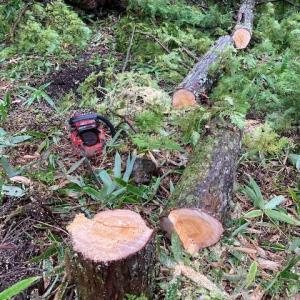 ヒルの住処で伐採作業