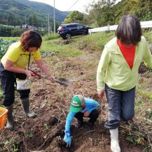 秋の収穫祭「芋掘り」