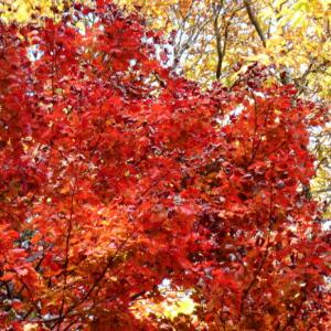 季節の贈り物「秋」