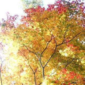 季節の贈り物「秋」Ⅱ