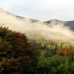 里山の朝霧が晴れるまで