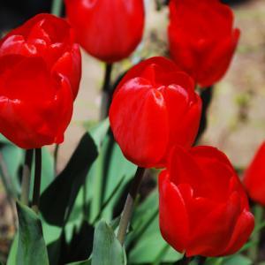 4月中旬~下旬(お庭のお花)