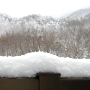 ひさしぶりの雪に…