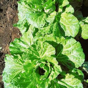 JA農業体験シリーズ4弾!台風だ!野菜を感謝して食べよう!