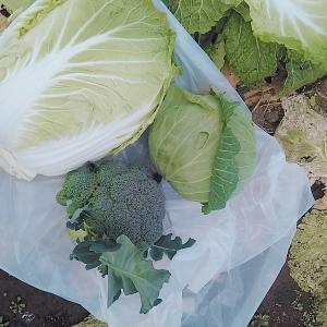 成長を願う年の初めはお野菜さんの成長にあやかって