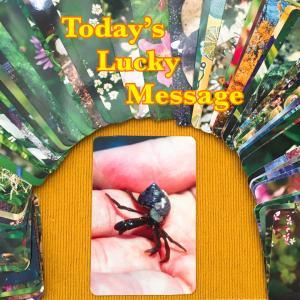 今日のラッキーメッセージ【模様替え】♡フラワーエッセンスカードリーディング♡