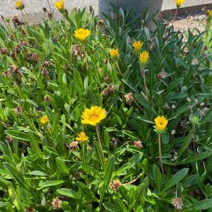 野に咲く花のように~♪⇒裸の大将⇒お、おにぎりが好きなんだな~。