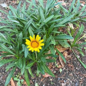 雑草のように力強くさるが、美しさも兼ね備える。けれど、自分は華ではなく、盛り立てる葉でありたい。