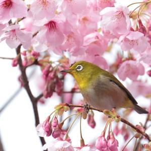 桜とメジロ、ついに完結