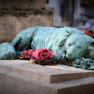 ペットのお葬式。豪華でも何だかな…