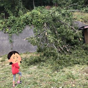 台風19号により地鎮祭延期!そして裏山の木が・・・