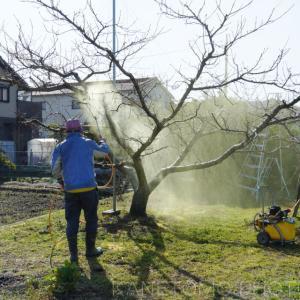桃の木へ薬剤散布