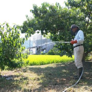 畑で水やり作業