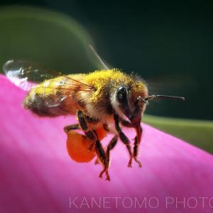 HDDの中のミツバチの写真