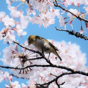 静かな春みっけ
