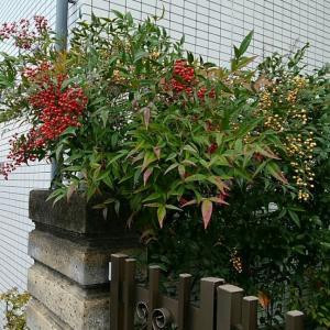 京都ばあばのつぶやき…。