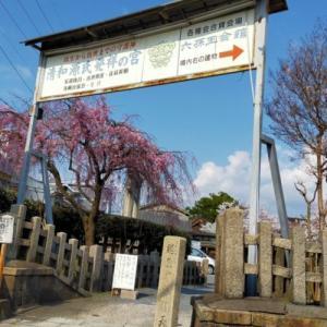4/4→六孫王神社の染井吉野(そめいよしの)が満開です。