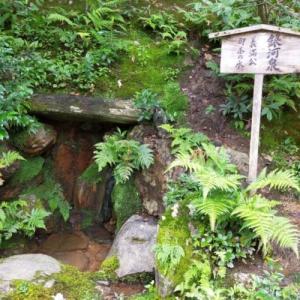 金閣寺その3…美しい苔の庭