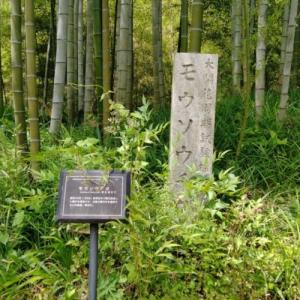 洛西竹林公園その3