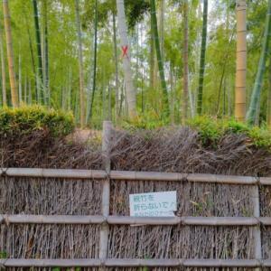 京都洛西「竹の径」の竹垣