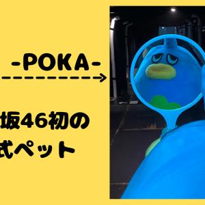 【日向坂46】ポカとは?青い鳥の正体が気になる方へ【公式ペット】