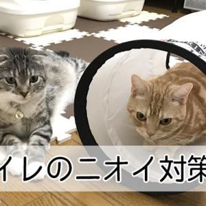 【猫トイレの臭いが気になるあなたへ】解決!猫トイレの臭い対策5選