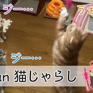 【Onvian 猫じゃらし レビュー】カラフルな羽根と魚のおもちゃで猫がくいつく猫じゃらし【動画あり】