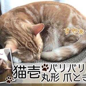 【猫壱 バリバリボウル レビュー】猫のマークがかわいい!取り合いになる爪とぎベッド【動画あり】
