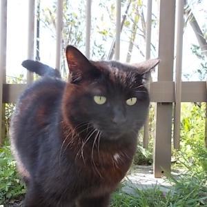 猫が寄ってきた&森永「チョコ好きのためのブラウニーサンドアイス」