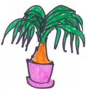 観葉植物 ~ポニーテール~