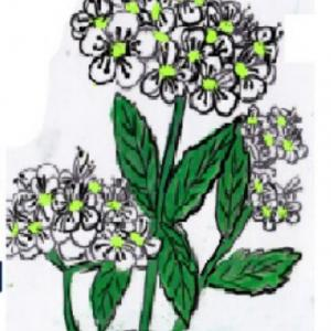 春の花木 ~コデマリ~
